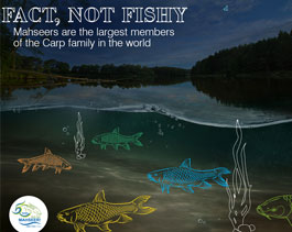 Fact, Not Fishy