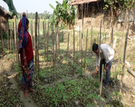 Livelihood n Emp. Vegetable cultivation-Haldia