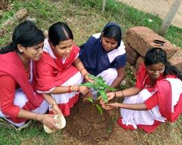 Tree Mittra - Plantation Drive Kalinganagar