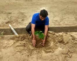 Tree Mittra - Plantation Drive WREL